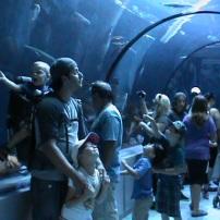 Nous voici à l'Aquarium de Québec. Charles-Azarie, alors âgé de 2 ans et demi est porté dans un sac à dos de type randonné (qui possède un espace rangement en dessous). Il a ainsi une meilleure visibilité lors des divers aquarium, sans avoir des fesses dans le visage! De plus, sa sécurité est accrue puisqu'il ne risque pas de faire trébucher quelqu'un! Voyez sur la droite, la comparaison avec les poussettes! :)